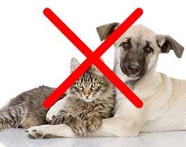 Парник урожайный защитит урожай от домашних животных, таких как кошки и собаки